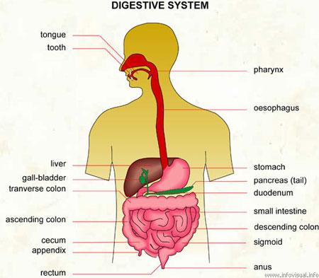 Особенности питания при заболеваниях органов пищеварительной системы