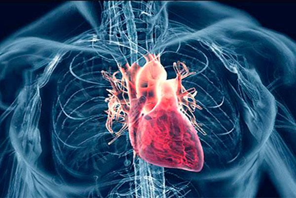 Порок сердца. Его симптомы и лечение