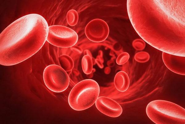 Какие продукты помогут улучшить показатели крови