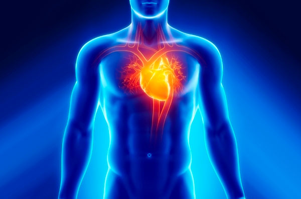 Особенности профилактики и лечения болезней сердечно-сосудистой системы